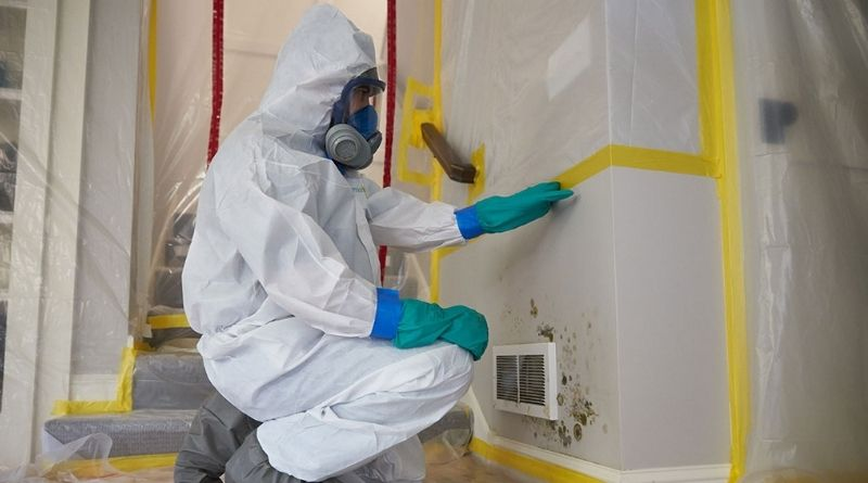 When To Call for Mold Remediation Services